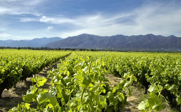 Roussillon: Home to Good Red and White Wine